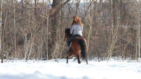 Een vrouw die op een paard in het bos op een sneeuwgrond lopen stock video