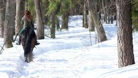 Een vrouw die op een paard in het bos op een sneeuwweg lopen stock videobeelden