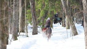Een vrouw die een paard in de bos Achtermening berijden stock footage