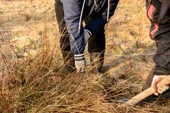 Een vrouw die een schop met behulp van graaft een boom op het wilde gebied voor het enten van op het een fruitboom royalty-vrije stock afbeeldingen