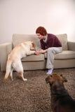 Een vrouw en Haar Honden Royalty-vrije Stock Foto