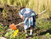 Een vrouw graaft een tuin met een schop royalty-vrije stock afbeelding
