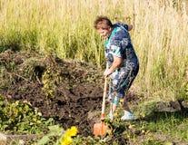 Een vrouw graaft een tuin met een schop royalty-vrije stock fotografie