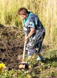 Een vrouw graaft een tuin met een schop stock afbeelding