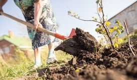 Een vrouw graaft een tuin met een schop royalty-vrije stock foto