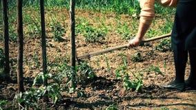 Een vrouw graaft een tuin voor voedsel stock footage