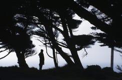 Een vrouw in het hout Stock Afbeeldingen