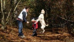 Een vrouw leidt een hond in het bos op stock video