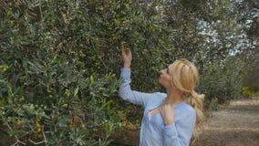 Een vrouw loopt op een aanplanting onder olijfbomen stock footage