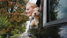 Een vrouw met een hond kijkt samen uit het venster van een reizende auto Het reizen met een huisdierenconcept stock videobeelden