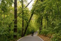 Een vrouw met een hond loopt langs een weg in het park Groene bomen felled na slecht weer royalty-vrije stock afbeelding