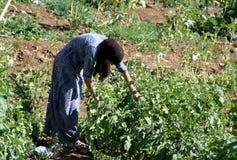 Een vrouw op een landbouwbedrijf Stock Fotografie