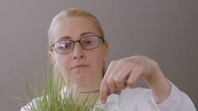 Een vrouw op middelbare leeftijd, met glazen op zijn ogen, maait het gazon met manicureschaar stock video