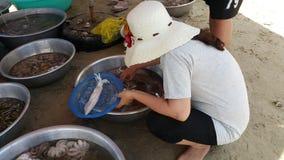 Een vrouw plukt pijlinktvis bij een zeevruchtenmarkt op het strand stock afbeelding