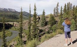 Een Vrouw schiet Foto's op Alpiene Byway van Lijnbackcountry stock fotografie