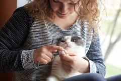 Een vrouw snijdt de klauwen van een kat met nagelschaartje, huisdierenzorg stock afbeeldingen
