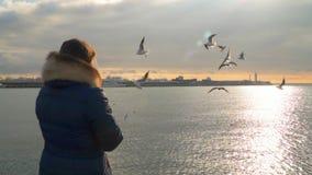 Een vrouw voedt meeuwen bij zonsondergang Bezinning van de zon in het overzees stock videobeelden