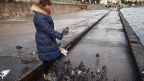 Een vrouw voedt vogels op de kade stock footage