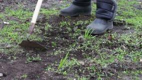 Een vrouw werkt in de tuin verwijderend gras uit de grond met een zwabber van schoffel stock video