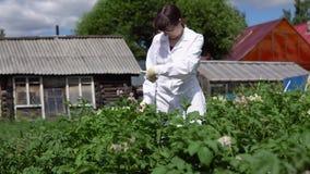 Een vrouwelijke laboratoriumtechnicus bestudeert de groei van aardappels op een experimentele plaats stock videobeelden