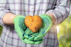 Een vrouwelijke landbouwer met een aardappel in haar handen stock foto's
