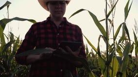 Een vrouwelijke landbouwer met een tablet in haar dient cornfield in De landbouwer onderzoekt het graan en registreert de resulta stock video