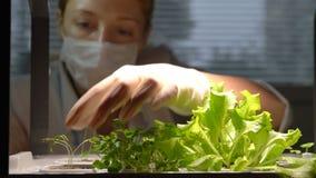 Een vrouwelijke wetenschapper plant weinig spruit in het laboratorium over stock videobeelden