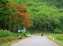 Een vrouwen berijdende motor op landelijke weg in Hanoi, Vietnam Royalty-vrije Stock Foto