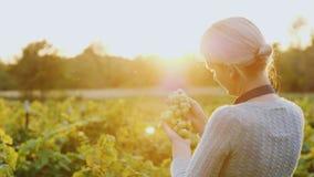 Een vrouwenlandbouwer bevindt zich in een wijngaardholding een bos van druiven De het plaatsen zon verlicht haar prachtig royalty-vrije stock foto's