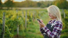 Een vrouwenlandbouwer gebruikt een smartphone op de achtergrond van zijn wijngaard Kleine bedrijfseigenaar Zachte nadruk royalty-vrije stock afbeeldingen