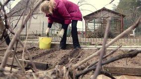 Een vrouwenlandbouwer werkt in haar eigen tuin stock video