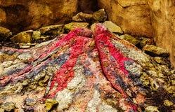 Een vulkaan stock foto