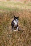 Een waakzame zwarte kat Stock Fotografie