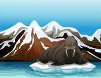 Een walrus stock illustratie