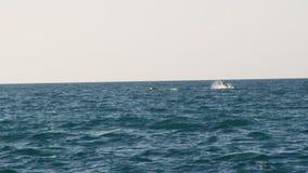 Een walvis bij gezicht op het brede overzees stock videobeelden