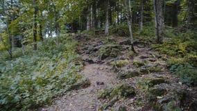 Een wandeling in de Woods stock video