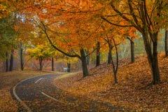 Een wandeling in Newtown-park stock foto