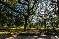 Een Warme dag bij Forsyth-Park in Savanne, Georgia Shaded door Magnol stock fotografie