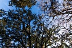 Een Warme dag bij Forsyth-Park in Savanne, Georgia Shaded door Magnol stock afbeeldingen