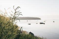 Een warme de zomeravond door de kust in Viimsi, Estland royalty-vrije stock foto's