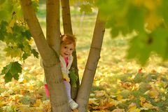 Een warme Zonnige dag in de Gouden herfst royalty-vrije stock foto