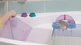Een wast de jonge vrouwenzorgen voor een huisdier, een pan onder een kraan met water en maakt een kooi in de badkamers, een knaag stock video