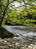 Een waterkant in Ise Jingu Stock Fotografie