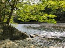 Een waterkant in Ise Jingu Stock Afbeeldingen