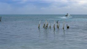 Een watertaxi vertrekt Caye-Breeuwijzer, Belize stock foto's