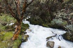 Een waterval in het Nationale Park van Huascaran stock fotografie