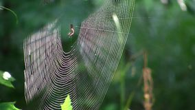 A web among the trees in the forest. Stock Footage