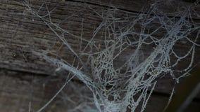 Een Web op het plafond in een blokhuis Oude schuur met spinnewebben en spinnen stock videobeelden