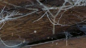 Een Web op het plafond in een blokhuis Oude schuur met spinnewebben en spinnen stock footage