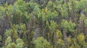 Een Weelderig Altijdgroen Bos stock afbeeldingen
